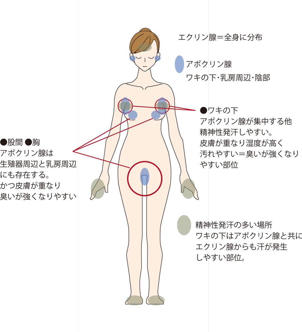アポクリン腺部位