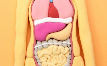 肝臓 体臭