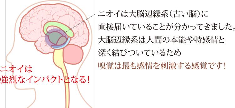 脳とニオイ